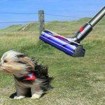 Best Pet Hair Vacuums UK 2018 Reviewed – Keep Dog And Cat Hair at Bay!