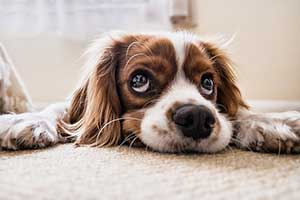 Puppy For The Best Cylinder Vacuum For Pet Hair