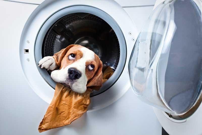 reason your washing machine is shaking